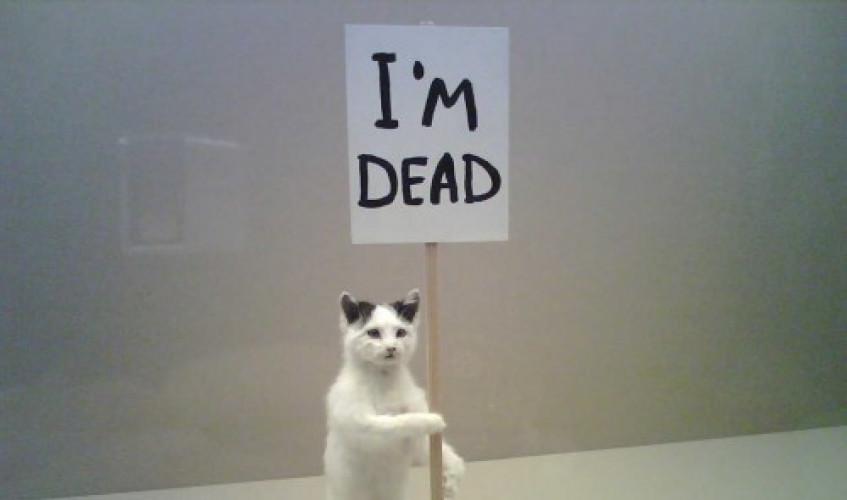 [92308-deadcat-jpg]